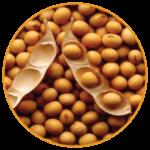 hydrolysed soy protein